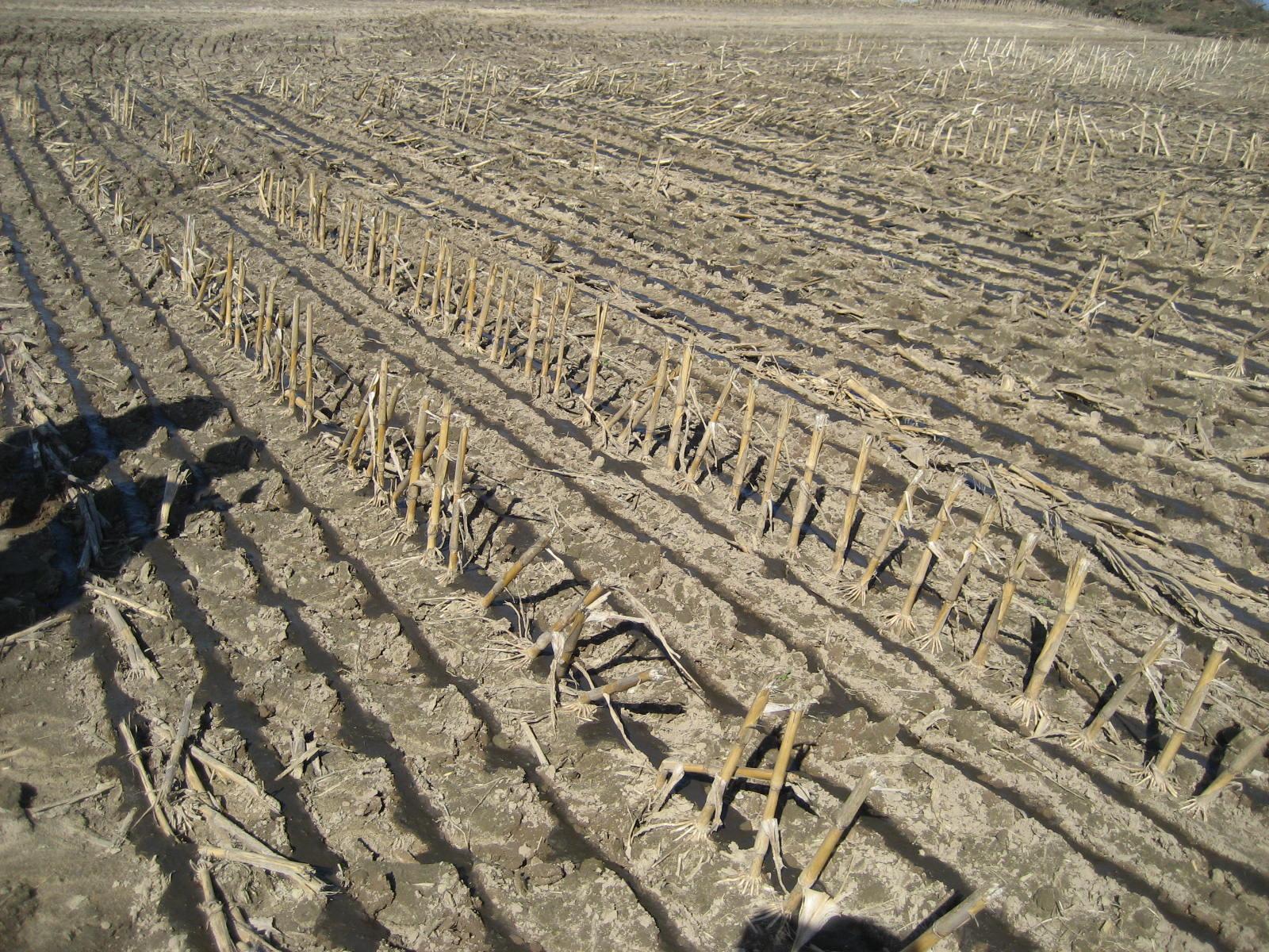 Bomech nedfældning på dortjord