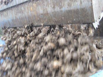 Meget beskidte roer kan også vaskes rene